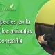 especies en la tierra y el papel de los animales de compañía