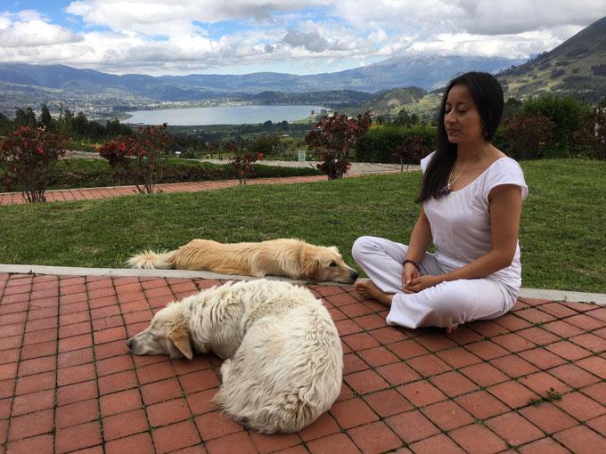 cómo hablar con los animales de compañía