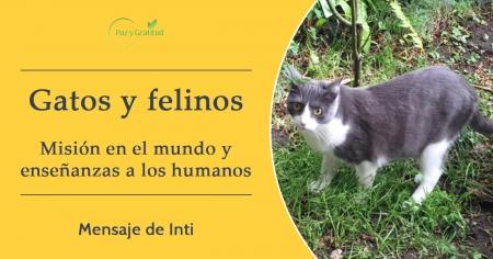 la misión de los gatos en el mundo